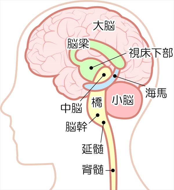 脳がストレスで影響を受ける部分