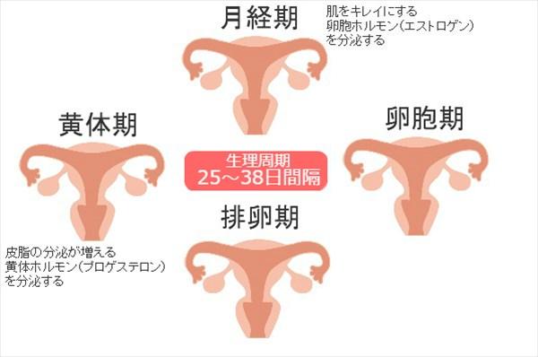 生理周期と顎ニキビの関係